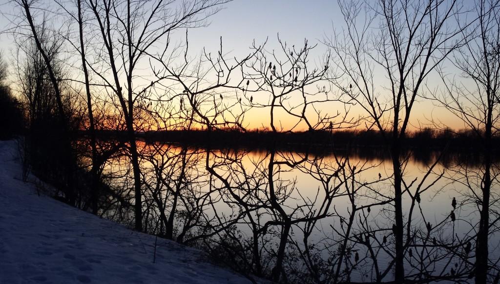 Trees, river, sunset
